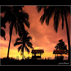 The Wonder of the Above....[EXPLORED] (FrozenBlizzard (I need to get a PRO Account soon)) Tags: sunset nature silhouette digital canon landscape photography photo interestingness interesting photos coconut philippines ngc silhouettes explore dslr 1001nights breathtaking godsgift thegalaxy explored abigfave flickrdiamond frhwofavs ozamizcity breathtakinggoldaward oltusfotos bestcapturesaoi coth5 breathtakinghalloffame elitegalleryaoi mygearandmesilver mygearandmegold mygearandmeplatinum mygearandmediamond tplr