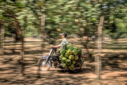 Speeding Coconuts