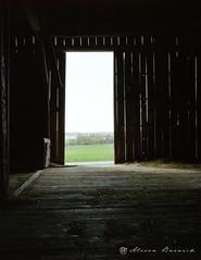 let us now praise (dairy) men {5/8} (fotobug8) Tags: family color kodak farm large 4x5 format dairy 160vc