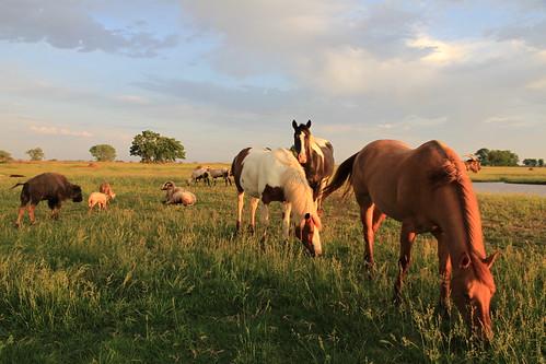 Harmony at A1 Savannahs Farm
