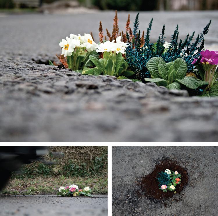 Pete Dungey: pothole gardens
