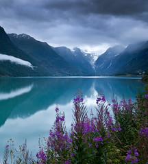 Lake Olden (Kenny Muir) Tags: lake norway landscape glacier willow herb fireweed olden rosebay