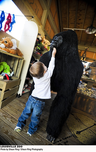Gorilla Forest Gift Shop