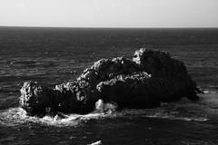 IMG_7608 (i Colori di Federico) Tags: santa bird seagull flavia palermo capo zafferano mongerbino
