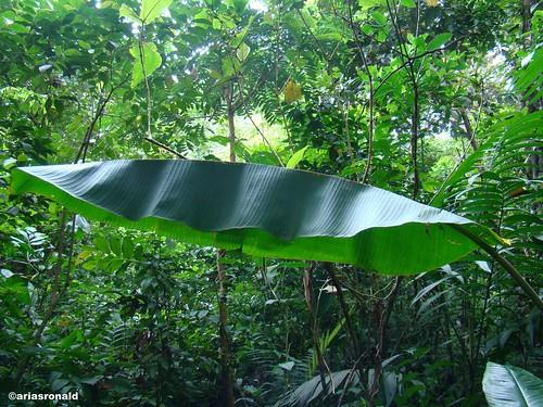 Biodiversidad: Murciélagos Blancos