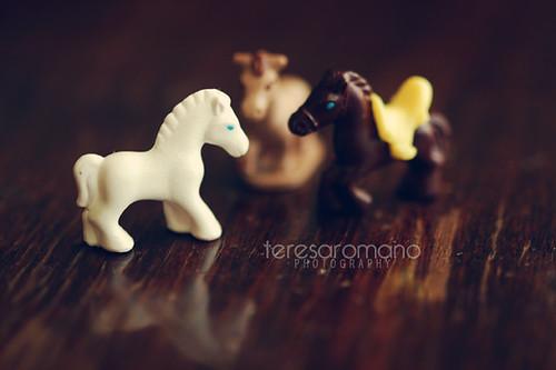 Three horses story