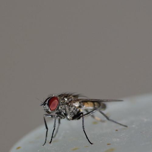 Fly #3