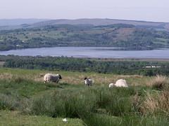 West Highland Way (puffin11uk) Tags: scotland lochlomond westhighlandway drymen rowardennan puffin11uk