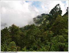 Lawa Mandau - Cloudy view to Lawa Mandau Peak, RTM tower (sam4605) Tags: nature forest landscape ed scenery hill olympus malaysia borneo kotakinabalu e3 sabah kota hutan kinabalu bukit pemandangan lawa mandau zd sabahborneo 1442mm telipok karatong lawamandau karatonghill bukitkaratong