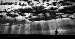 he sees the birds flying (Gergely Jancs) Tags: light bw sun white black art self hero