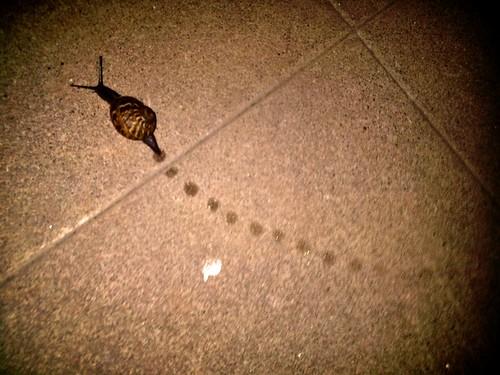 2010.06.08 - snail image