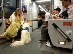 Muni Riders (davitydave) Tags: sf sanfrancisco publictransportation passengers muni sfist sfweekly