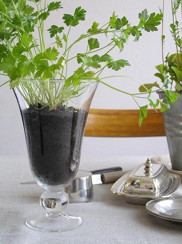 Parsley in a vase