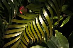 """""""Centipede Plant"""""""