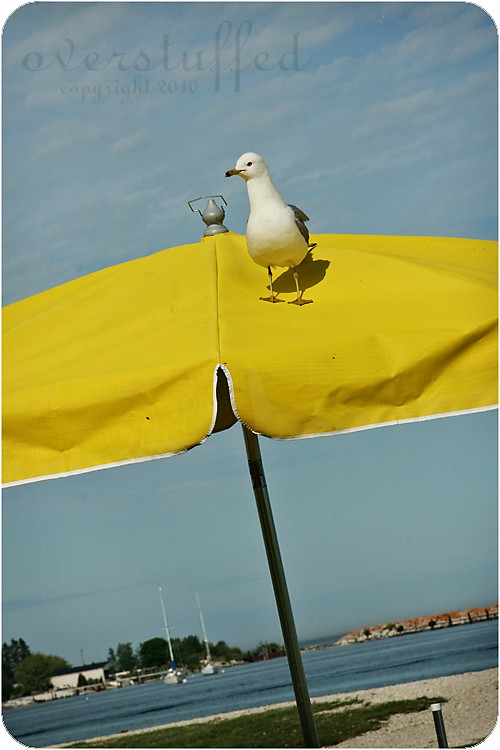 Seagull and Yellow Umbrella