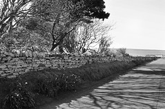 Towards Scapa Beach (bm^) Tags: city uk shadow white black tree scotland blackwhite bomen orkney nikon shadows zwartwit unitedkingdom boom schaduw zwart wit kirkwall mainland scapa schotland schaduwen d90 blackwhitephotos orcades theorkneys nikond90bw