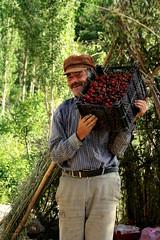 Man selling cherries (P A H L A V A N) Tags: park man photo persian cherries village iran persia iranian pars  selling sina   irani farsi melat  fars parsi daregaz   kazem  gorni  dargaz   pahlavan