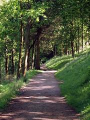 Through the Trees (saxonfenken) Tags: trees path infinity bank vanishing 195 gamewinner friendlychallenge pregamewinner