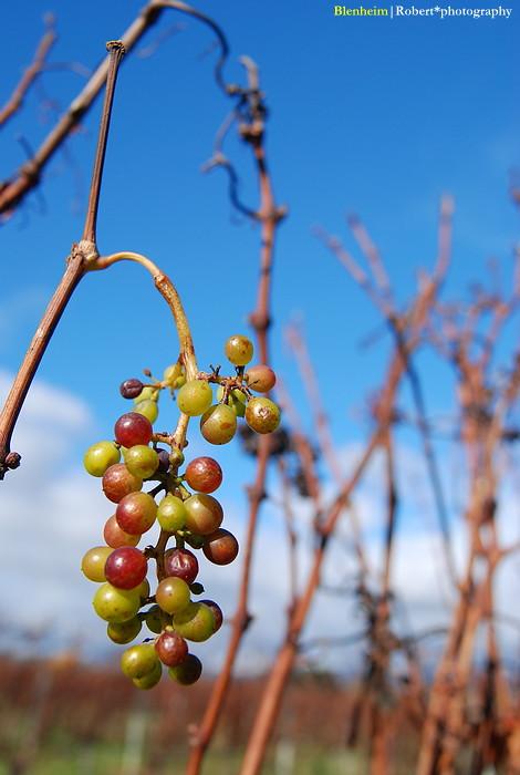 Grape 02