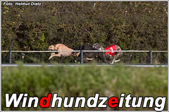 Greyhound Streipies Lizenzlauf in Münster
