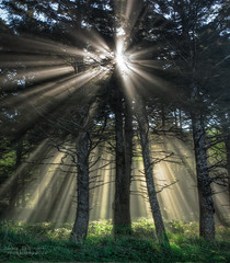 Touched by the Light (janusz l) Tags: light fog oregon forest canon coast bravo ray pacific god coastal rays cannonbeach hdr myst hugpoint honorablemention 2011 janusz leszczynski abigfave anawesomeshot northshorechallenge 002333 touchedbythelight 5dmkii bestcapturesaoi elitegalleryaoi