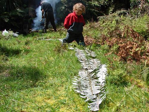 silver fern path