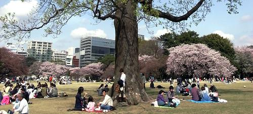 2010/10/28 SHINJYUKU-GYOEN(2010/4/19 )