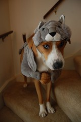 squirrelhound