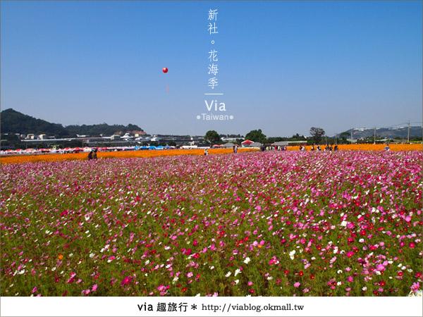 【2010新社花海】via帶大家欣賞全台最美的花海!3