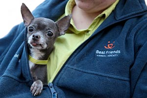 Another puppy mill dog rescued by Best Friends Puppies Aren't Products
