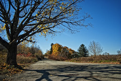 Autumn in Silent Hill (Eye of the Storm Photography) Tags: landscape pennsylvania centralia coalcountry