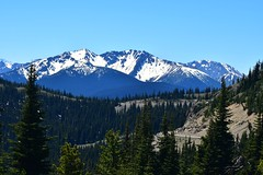 (careth@2012) Tags: scene scenery scenic panorama view trees wilderness outdoors snowcapped snowcappedmountains mountains landscape nature manningpark ecmanningprovincialpark manningprovincialpark britishcolumbia