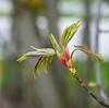 Frühling - Leica-Summicron-50-2.0 (bega_art) Tags: blüte frühling bokeh leicasummicron5020 altglas alteobjektive adaption