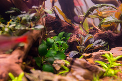 _MG_9816 (dearwalrus) Tags: eheim vivaline 330 canon 70d sigma 1750 acuario aquarium