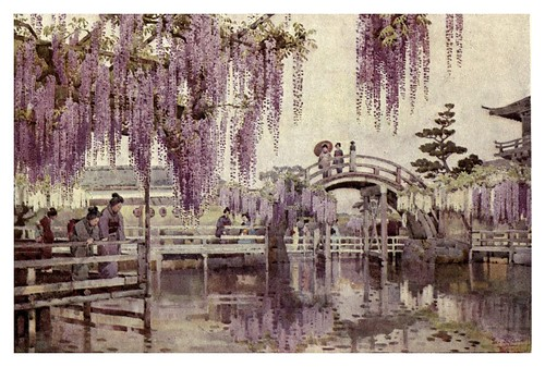 019- Wisteria en Kameido-The flowers and gardens of Japan (1908)-  Ella Du Cane