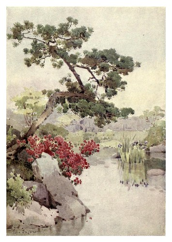 028- Azalea y pino-The flowers and gardens of Japan (1908)-  Ella Du Cane