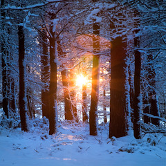 Crunching Sounds (jasontheaker) Tags: uk sunset snow tree pine forest landscape frost yorkshire workshop dales otley jasontheaker
