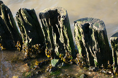 The old jetty... (SteveJM2009) Tags: wood uk sea rot beach log dorset weathered poole stevemaskell newyearsday2010 yahoo:yourpictures=time2013