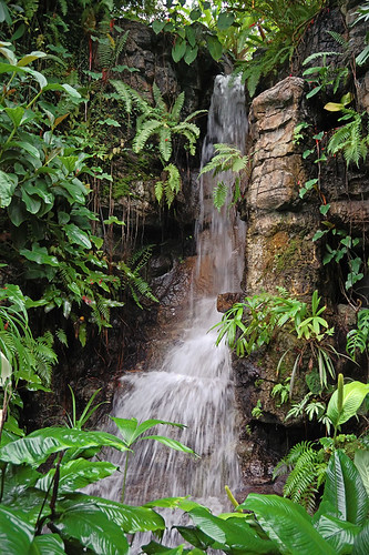 Waterfall in Climatron, at Missouri Botanical Garden (Shaw's Garden), in Saint Louis, Missouri, USA