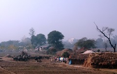 Living on the edge (just_punjabi) Tags: india punjab nomads ropar gujjars