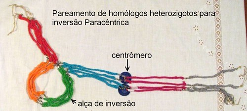 Pareamento de homólogos heterozigotos para inversão Paracêntrica