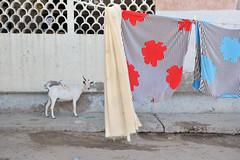 MIT_1546-Edit (Mitya Aleshkovsky) Tags: travel somalia somaliland