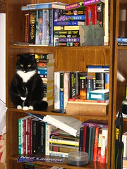 Bookcase kitty