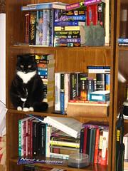 Bookcase kitty