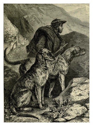 005-Deerhound escocéses-The illustrated book of the dog 1881- Vero Kemball Shaw