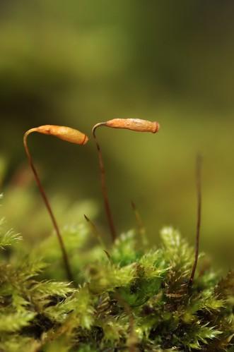 Mos - Moss