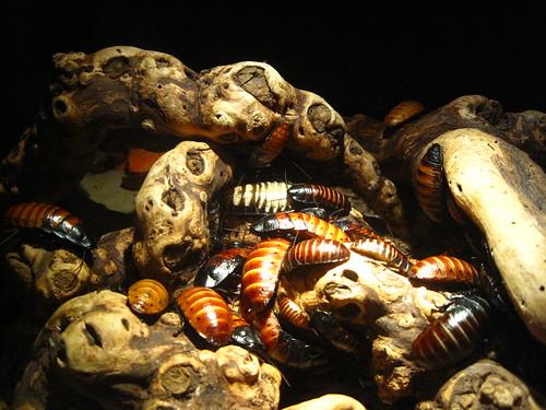 ummm roaches.