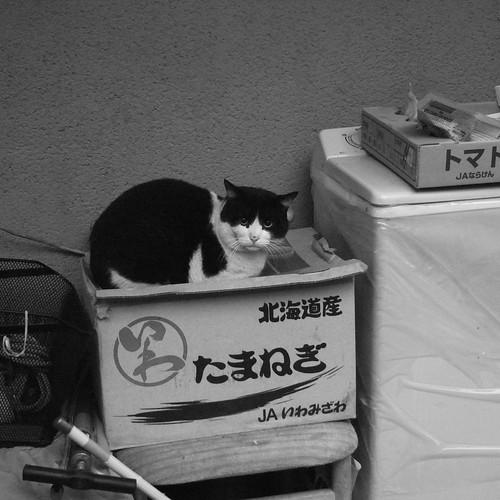 Today's Cat@2010-01-28