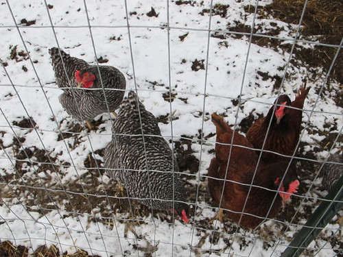 Hot chicks in the snow.