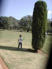 Gumbaz, Arno and Tree (lakshmi_amman) Tags: india mysore parti gumbaz